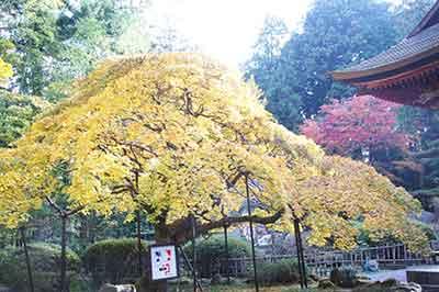 20141108_fuji_kouyou