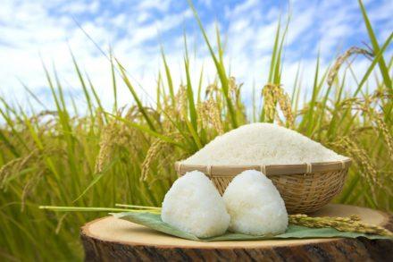 商標ともかかわりの深いお米の品種名と由来