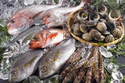 商標は水産資源保護の力になれますか